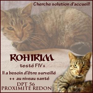 Urgent Rohirim chat FIV+ - dpt 56 près de Redon Rohirim-3d5095d